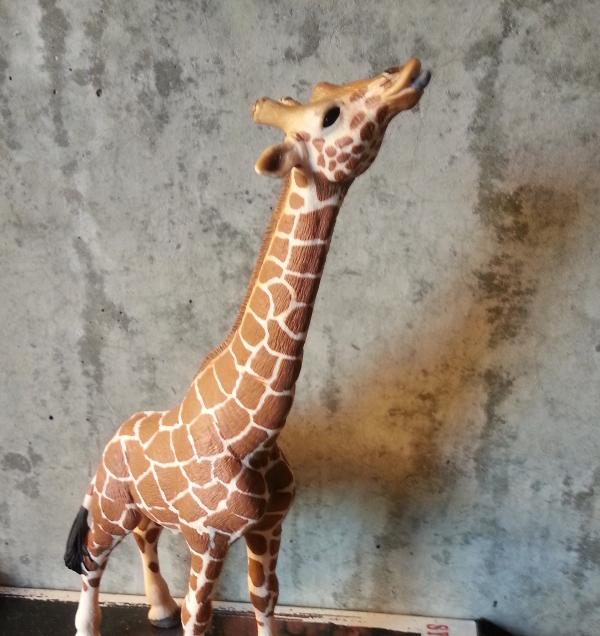 GiraffeBefore