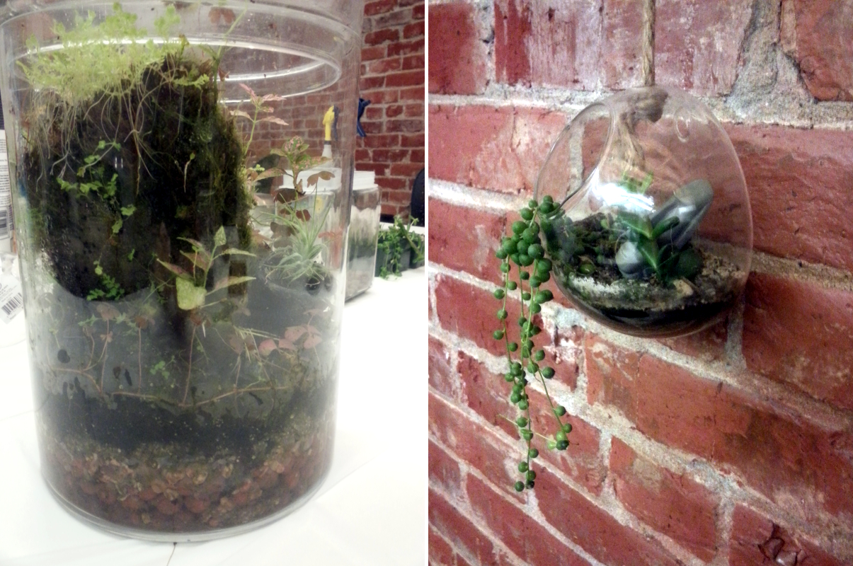 Terrarium Building Class | Red Circle Crafts